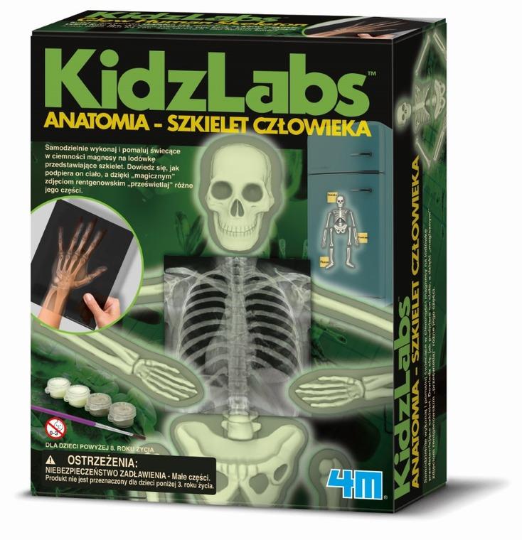 4M, Zestaw kreatywny, Anatomia - szkielet człowieka
