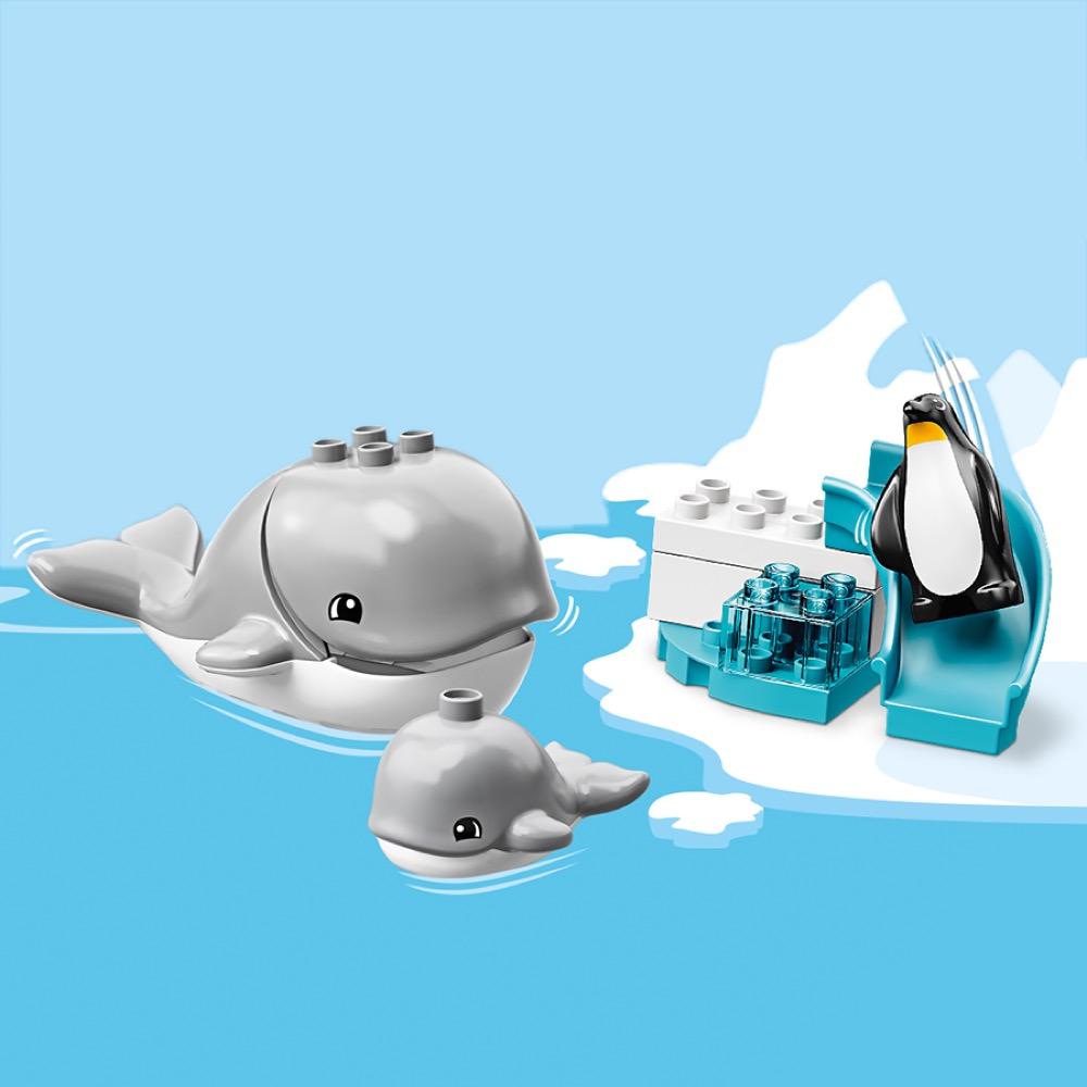 Obserwacje wielorybów