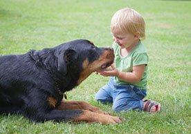 Pies a dziecko - dobroczynny wpływ zwierząt domowych